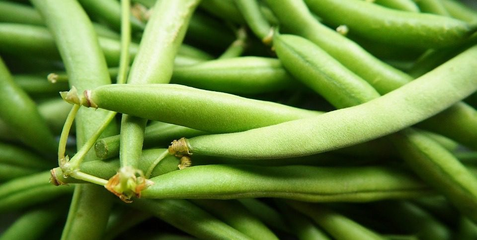 Campaign win: Tesco changes rules on Kenyan green beans to cut food waste