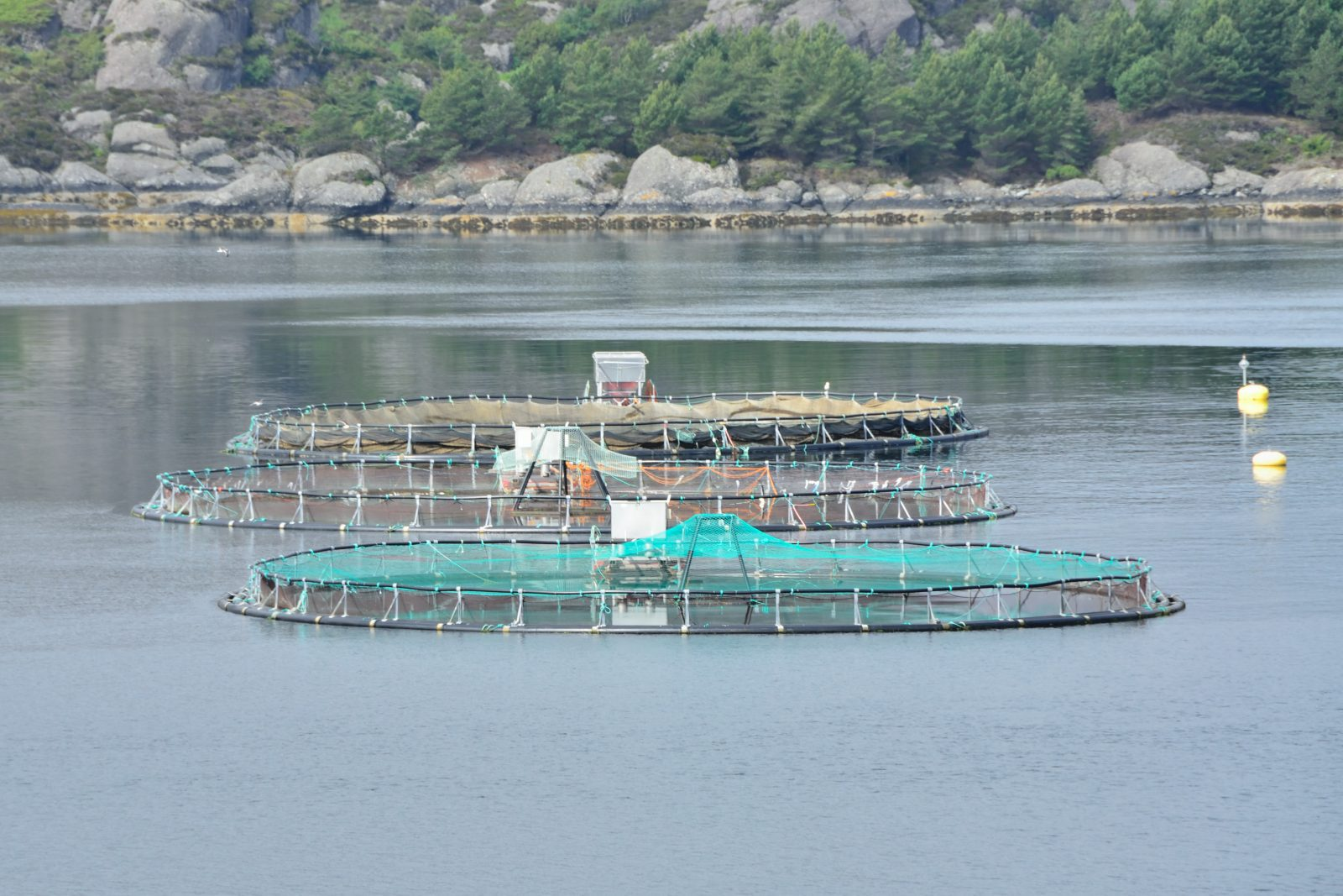 Feedback welcomes new report challenging the aquaculture industry