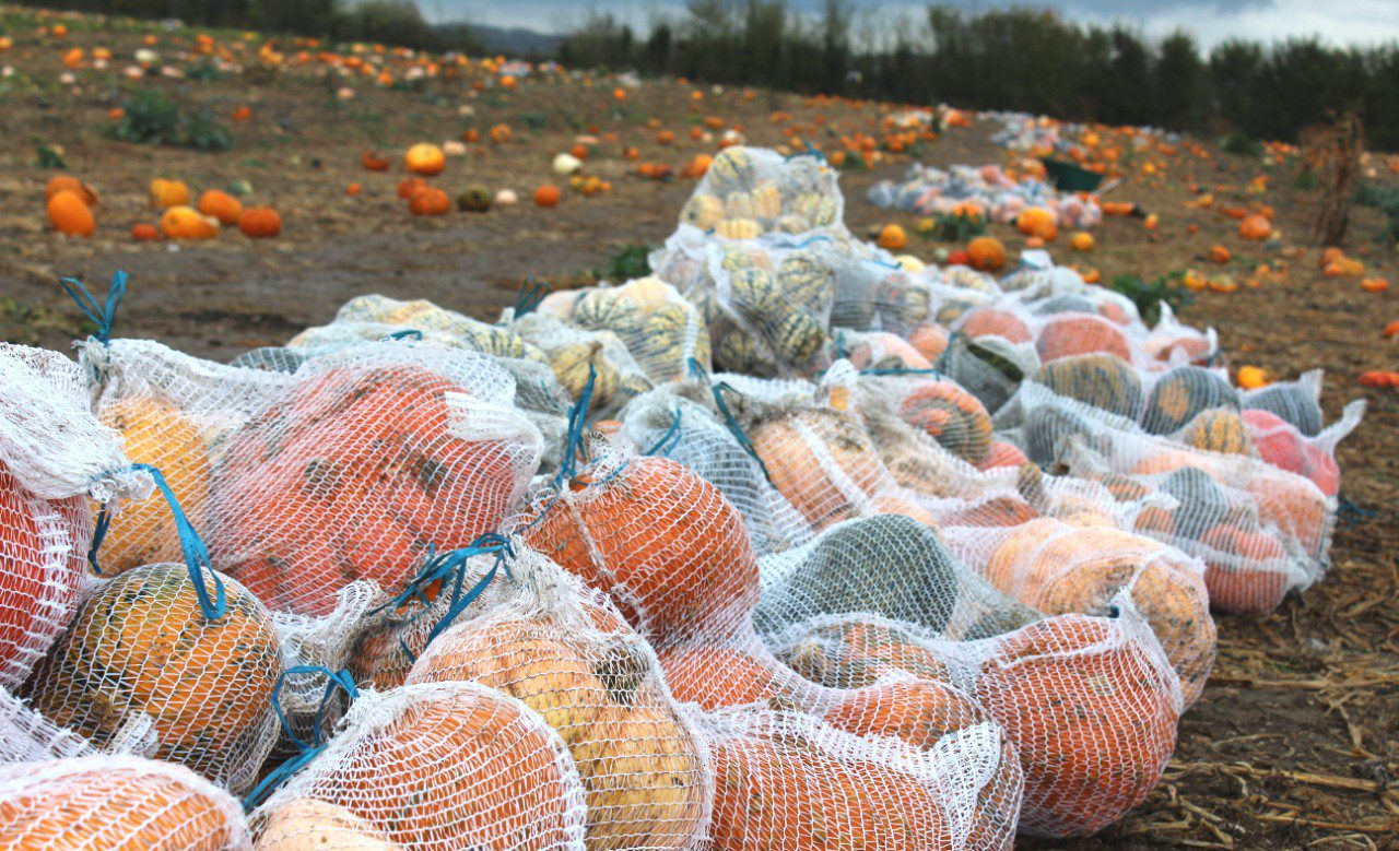 Help us reveal the scale of Europe's farm food waste