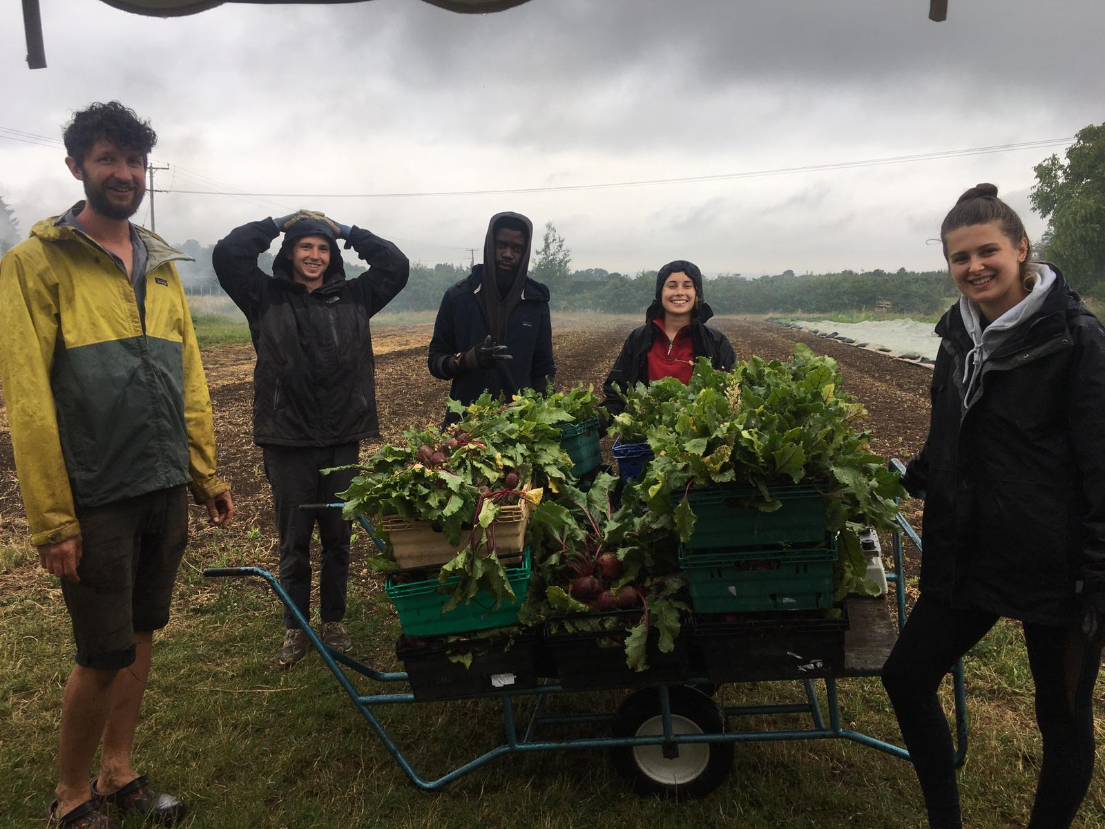 Reflections from working on Sutton Community Farm